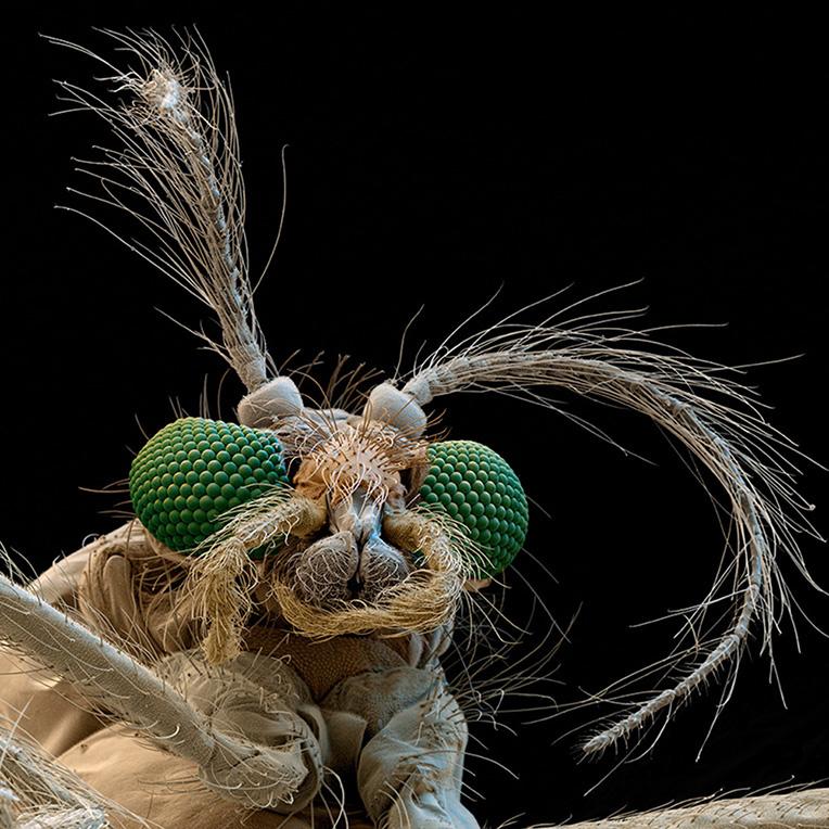 Faszination der Mikrowelt